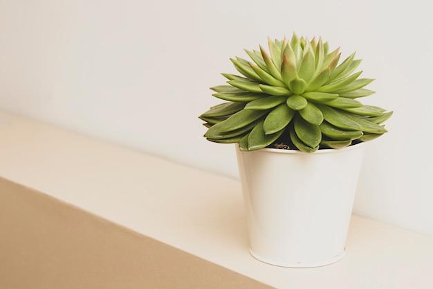 Сочные растения комнатные декоративные цветочные горшки
