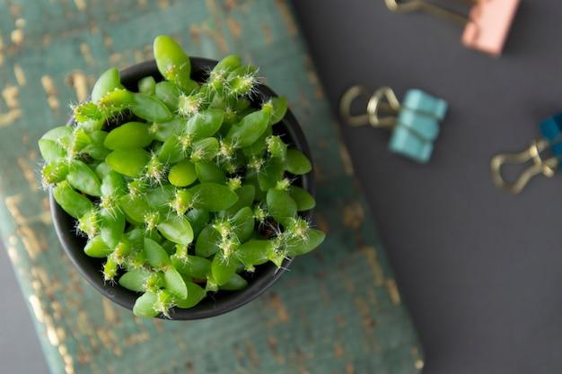 多肉植物やサボテンの分離された灰色の背景上に分離されて小さな植物。装飾的な屋内植物