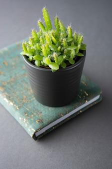 多肉植物やサボテンの植物、灰色の背景に。