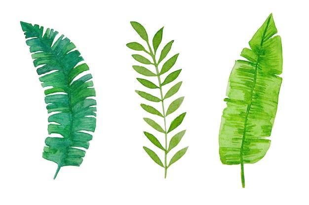 白い背景の水彩画、手描きの緑の熱帯の葉。