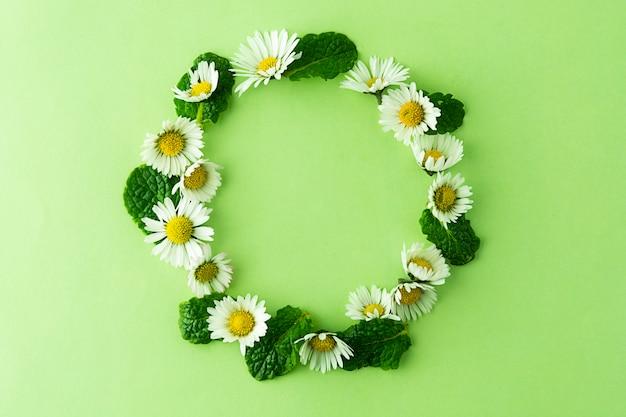カモミールの花とミントのハーブサークルフレーム。夏の緑の背景。