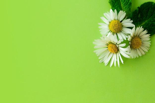 天然カモミールの花とミントのハーブ。夏の背景、コピースペース。