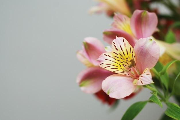 美しい春のピンクの花の花束。