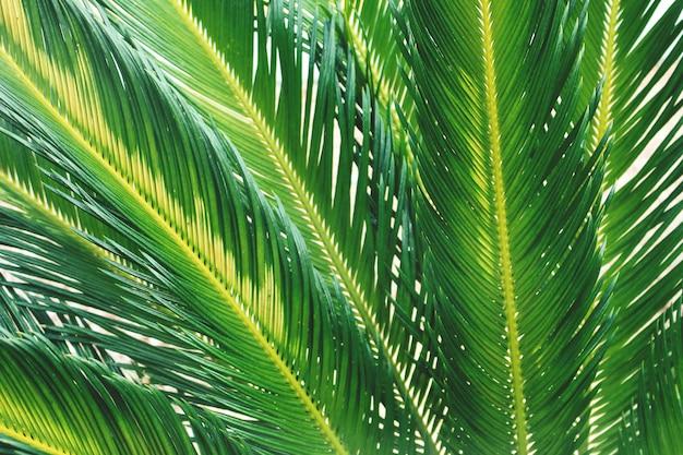 夏の熱帯ヤシの木の枝をクローズアップ