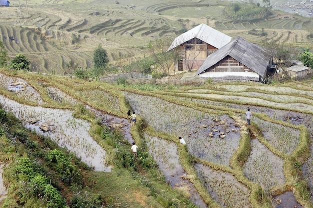 Террасы для выращивания риса, орошаемые вьетнамскими фермерами в горах
