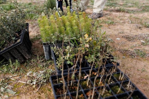 Садовые инструменты для посадки деревьев