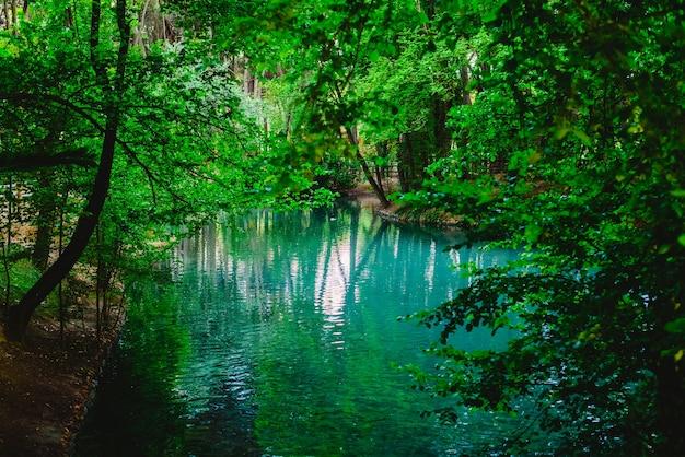 緑の森の中の流れと湖の透明な水