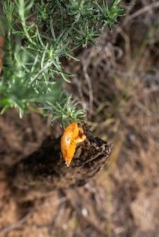Одиночный грибок поверх мокрого ствола, оранжевый гриб с симпатичной шапочкой.