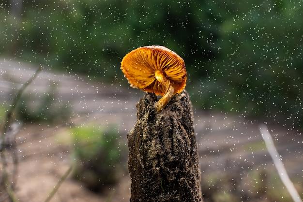 Одинокий гриб мокрый ствол, оранжевый гриб хорошо освещен во время снегопада.