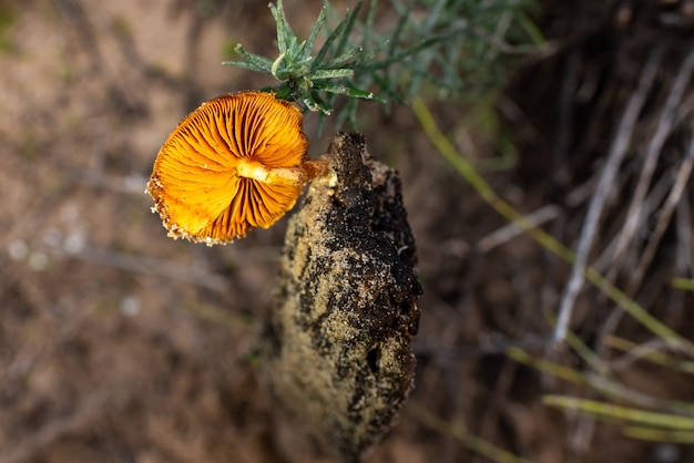 Одиночный гриб во влажном стволе, хорошо освещенный гриб оранжевого гриба, можно собирать для приготовления пищи.