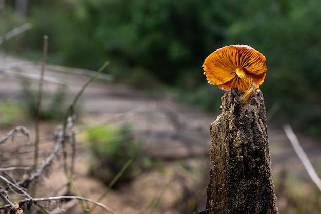 濡れたトランクの上に孤独な真菌、素敵な帽子とオレンジ色のキノコ。