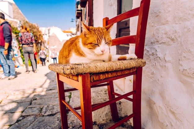 日焼けの伝統的なイタリアの家のドアで木の椅子に座っているオレンジ色のぽっちゃり猫