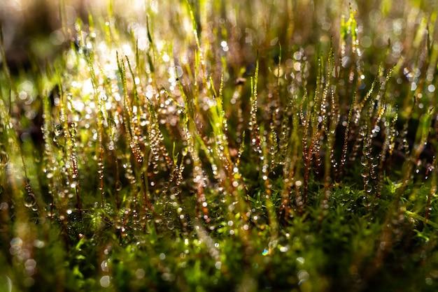地衣類と緑の苔のある健康的な森の画像は、環境保護からの雨水の滴で覆われています。
