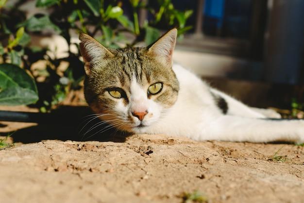 カメラを見て横になっている野良猫。