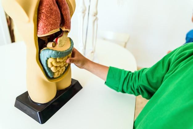 Студенты на уроке анатомии и биологии человека с искусственной моделью человеческого тела с органами.