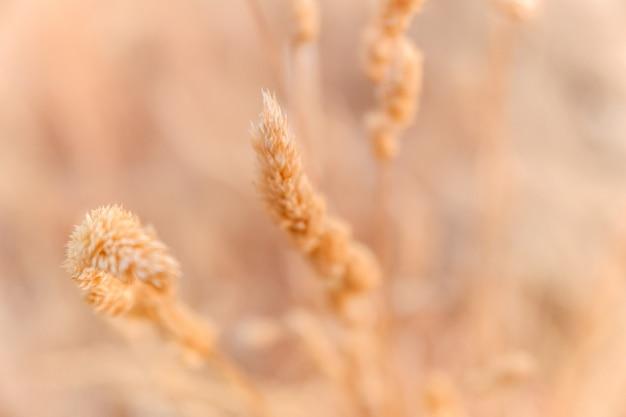 夏の終わりに乾燥した植物の詳細