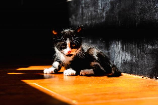 Черный котенок отдыхает на солнце на полу дома.