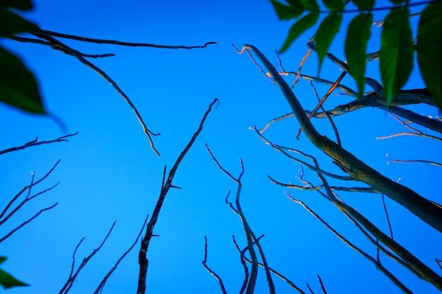 Узкие сухие стволы деревьев в сумерках, силуэты на красивой картине, которая пугает.