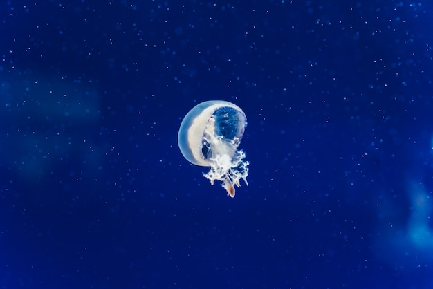 海に浮かぶ美しくカラフルな生きたクラゲ