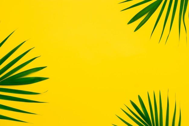 黄色の背景にヤシの木の緑の葉。