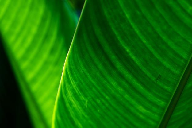 Зеленая природа тропический листья фон.