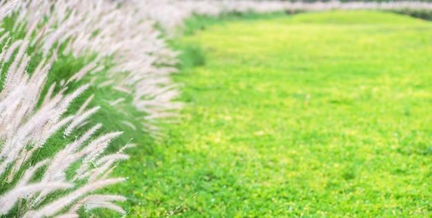 美しい緑の芝生花自然夏の背景