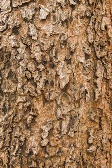 乾燥樹皮の背景。亀裂を辿る木の皮。