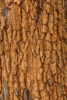 樹皮の質感。クラックを辿る木の皮