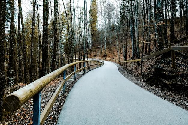 森の中を歩くのに使われる小さな曲がりくねったコンクリートの道の上の孤独な気分。