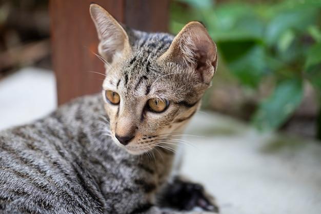 床に横たわって休んで小さな茶色のトラ猫子猫