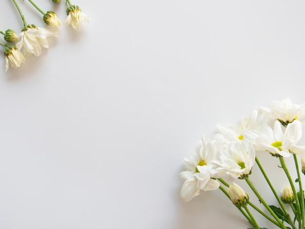 白い菊の花、白い背景に緑の葉が咲く