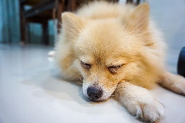 眠っている犬と部屋で休憩する、眠っている犬と夢を見ている
