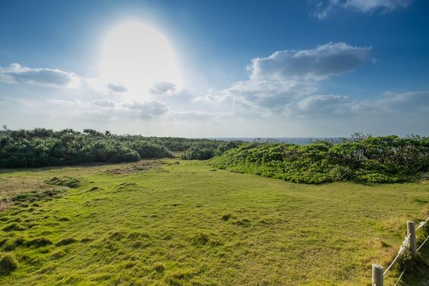 景色、青い空、雲、緑の野原と地上の植物と輝く太陽