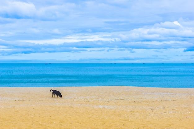Пасмурное голубое небо и море с золотым песком пляжа.