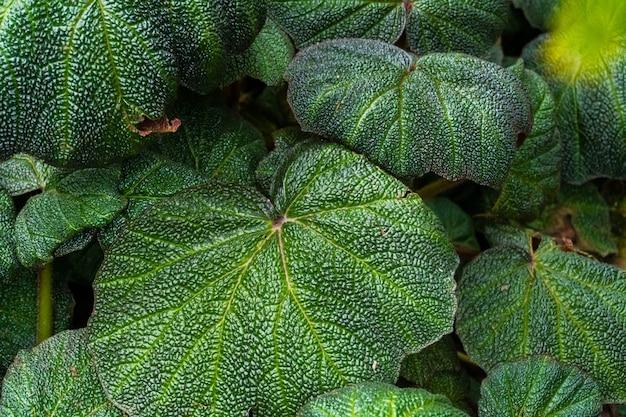テクスチャと緑の葉のグループ