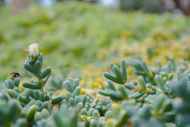画像全体を配置した多肉植物のグループ