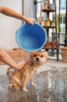 ポメラニアンまたは小型犬の品種は所有者によってシャワーを浴びて、コンクリートの床に立っていました