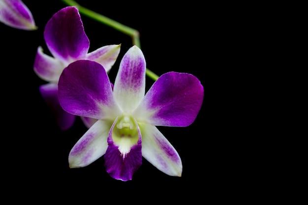 Орхидеи в саду имеют черный фон.