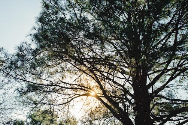 Тень большая ветка на закате