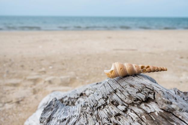 海辺で木材に配置されたシェル
