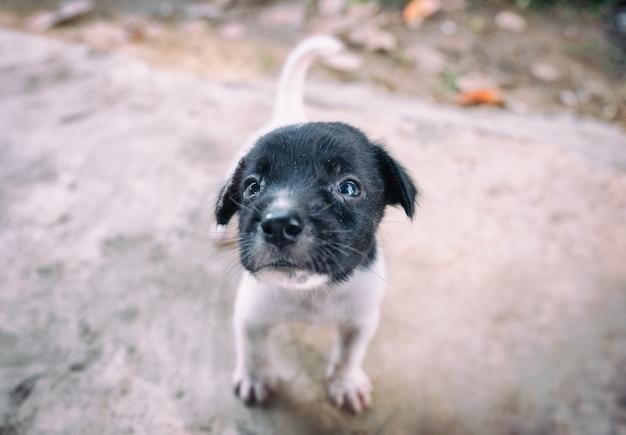 黒白い子犬が探しています