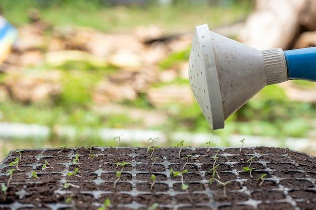 水まきはトレイの苗木に水を注ぐことができます