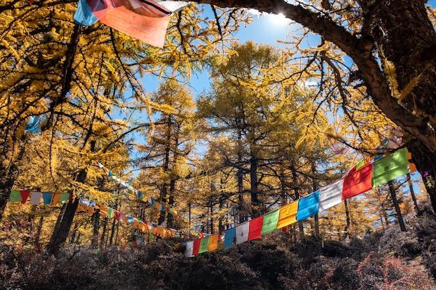 カラフルな旗の祈りの飛行と黄金の松林に輝く日光