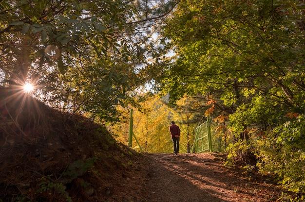 紅川の夕日に秋にイチョウの木の庭を訪れる観光客