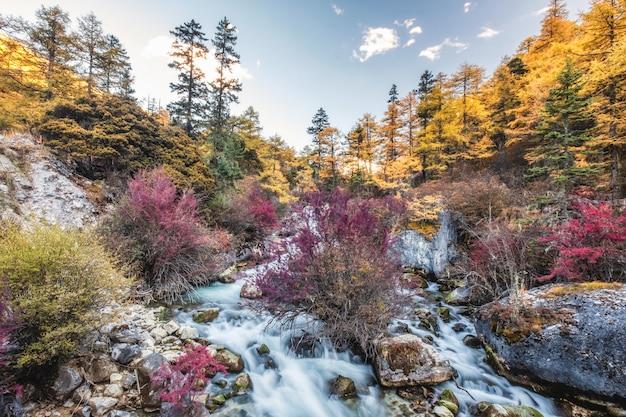 秋の森のカラフルな滝