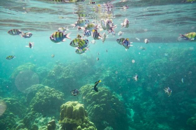 Подводная рыба толпится вокруг рифа