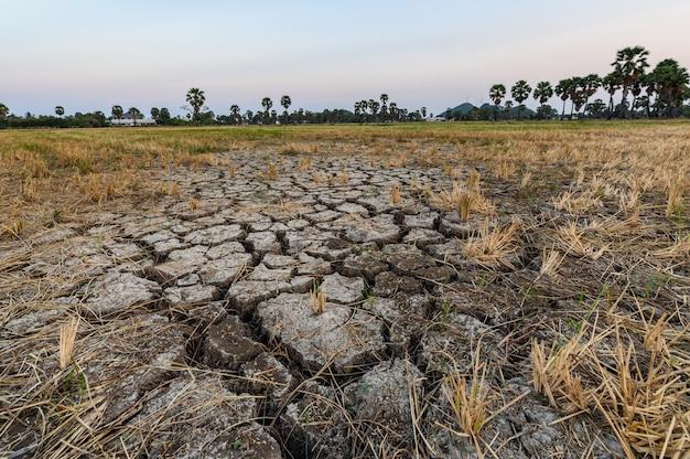 乾いたひび割れた土壌地盤テクスチャ