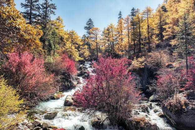 国立公園の谷の滝とカラフルな松林
