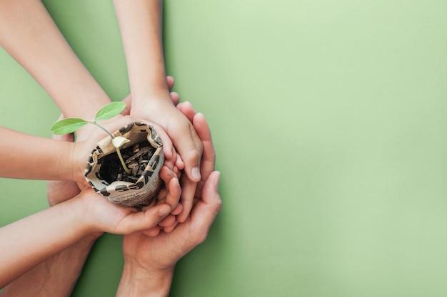 新聞ポットに苗木を保持手