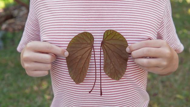 Руки держат листья в форме почек, всемирный день почек, национальный день донора органов, концепция благотворительного пожертвования